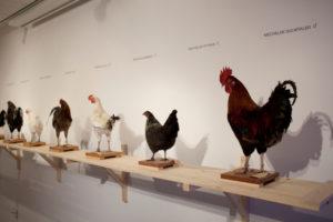 KoenVanMechelen Cosmopolitan Chicken Project Het Domein 2015-2