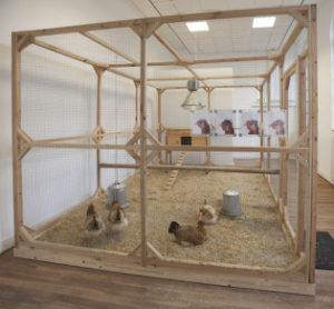 KoenvanMechelen kippen in Het Domein in Sittard 2015